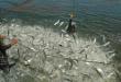 Ini Jurus Dinas Perikanan Bikin Produksi Ikan Budidaya Meningkat