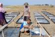 Inovasi Jitu Dinas Perikanan Dalam Pengembangan Usaha Garam Rakyat di Karawang